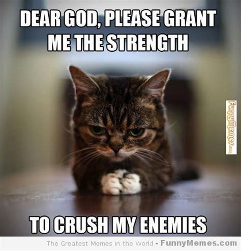 Funniest Cat Memes - funny cat memes cat memes please grant me the strength funnymemes com funny