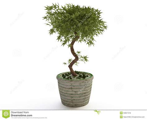 plante d int 233 rieur arbre de bonsa 239 s dans le pot de fleur en c 233 ramique illustration stock