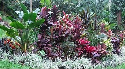 Tropical Plants Landscaping Sun Australia Landscape Cordylines
