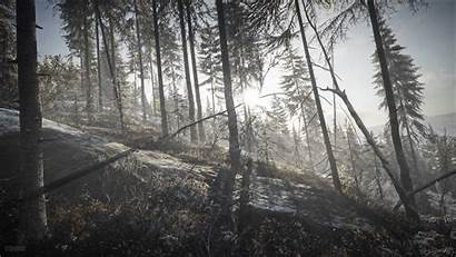 Wild Call Thehunter Hunter Dawn Nature 4k