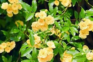 Busch Mit Gelben Blüten : sch ner fr hling strauch mit gelben stockfoto colourbox ~ Frokenaadalensverden.com Haus und Dekorationen