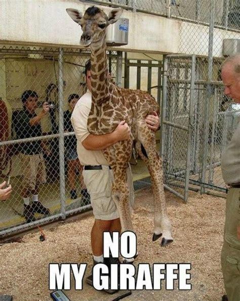 Meme Giraffe - pics for gt funny drunk giraffe meme