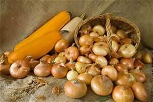 Zwiebeln Anbauen Anleitung : zwiebeln anbauen zwiebeln pflanzen pflegen ernten ~ Yasmunasinghe.com Haus und Dekorationen