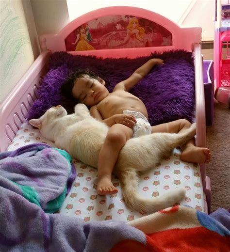 cute pictures  babies sleeping  pets