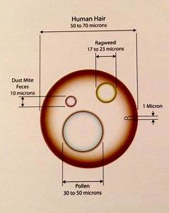 Particle Size Chart In Microns For Human Hair  Ragweed