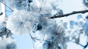 eletragesi: Blue Flowers Tumblr Images