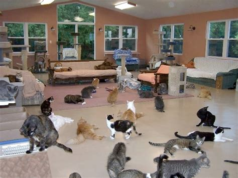 animal shelter cats in high places 17 best images about communal housing cats on Lesleys