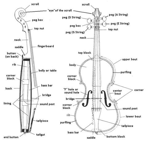 Best Images About Violins Pinterest The Amazing