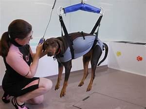 Hydrotherapy For Dogs In Lincolnshire
