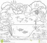 Pond Coloring Duck Drawings Colour Vector Dreamstime 97kb 1300 sketch template