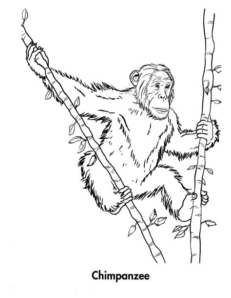 Printable Coloring Pages by Free Printable Chimpanzee Coloring Pages For