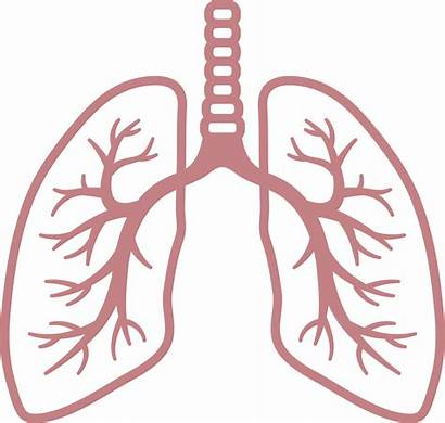Lungs Clipart Lung Clip Breathing Rate Background