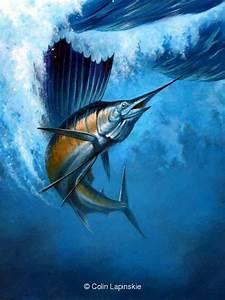 Sailfish 1