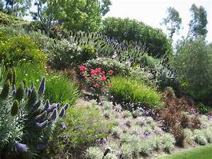 swaths of color on a slope looks like pride of madeira With decorer son jardin avec des galets 4 faire un jardin autour dune piscine planter les abords d