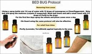 doterra essential oils on pinterest doterra essential With bed bug protocol