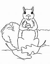 Squirrel Coloring Pages Print Acorn Squirrels Clipart Printable Holding Cliparts Clip Animal Pdf Library Coloringpages101 Animalplace Popular Comments Chipmunk sketch template