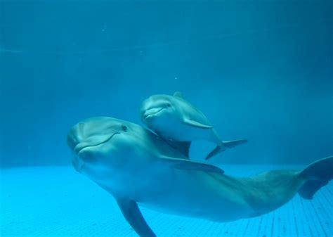 Il delfino giocherellone - Super! TV