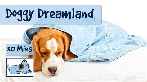 doggy dreamland soothing sleep   dogs calm