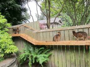 diy cat enclosure awesome large diy backyard cat enclosure cuckoo4design