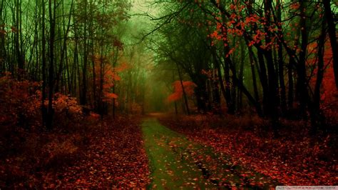 1080p Fall Desktop Backgrounds Hd by Autumn Hd Wallpapers 1080p Wallpapersafari