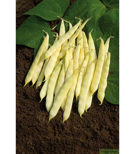 cuisiner les haricots mange tout boite de graines a semer de haricot nain serpedor