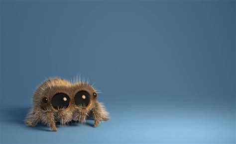 Equal Parts Creepy And Cute, 'lucas The Spider' Is Weaving