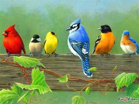 beautiful birds picture   fun