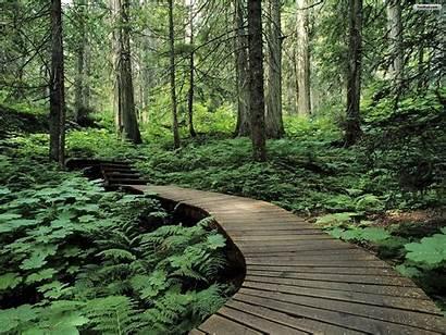 Iphone Forest Walldiskpaper Davion Landscape October Under