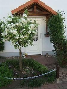 Baum Im Topf : baum auf der terasse mein sch ner garten forum ~ Michelbontemps.com Haus und Dekorationen