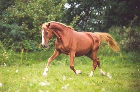 süße pferde bilder deizisau vermisstes pferd ertrinkt im neckar esslingen stuttgarter nachrichten