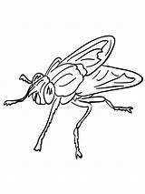 Fly Coloring Colorear Dibujos Mosca Printable Imprimir Gratis sketch template