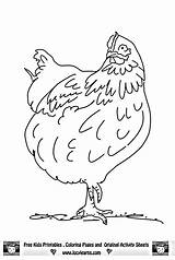 Chicken Coloring Pages Rooster Chickens Print Adult Printable Chook Roosters Little Learns Lucy Template Designs Getcoloringpages Drawings Ausmalbilder Baby Cute sketch template