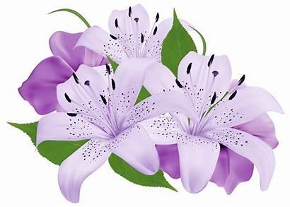 Flower Lily Clipart Bokeh Clip Purple Transparent