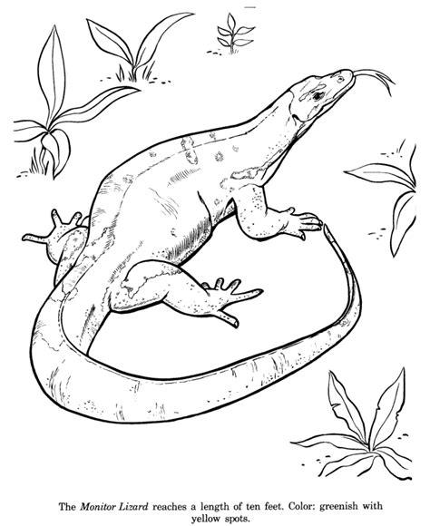 lizards coloring pages az coloring pages