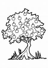 Tree Coloring Pages Apple Printable sketch template
