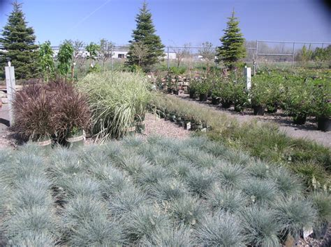 landscaping grasses photos landscaping with ornamental grasses www pixshark com images galleries with a bite