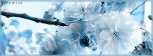Blue Flowers Facebook Covers, Blue Flowers FB Covers, Blue ...