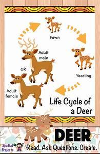 All About Deer Nonfiction Unit