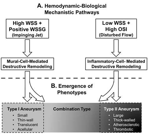 high wss   wss complex interactions  hemodynamics