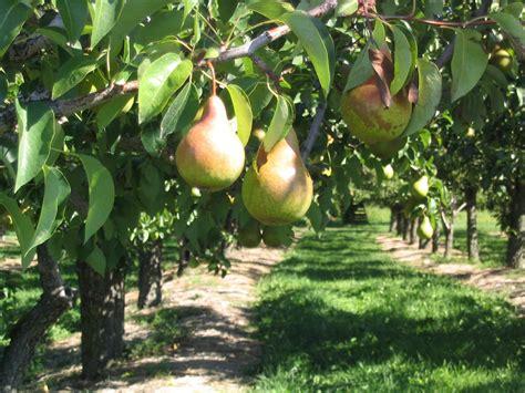 Gambar : pohon cabang menanam Kebun buah makanan