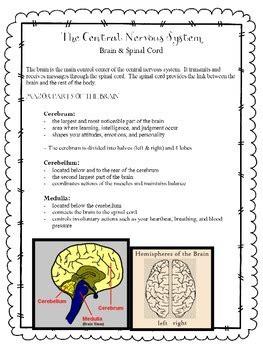nervous system sensory organs unit   grade love tpt