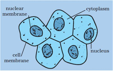 structure  function  cells learn biology class