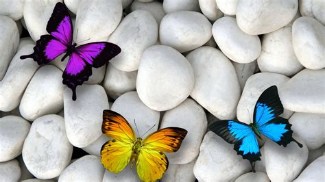 Butterfly And Stones by Butterfly Stones White Blue Purple Orange 4k Wallpaper