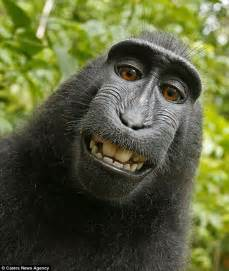 Animal selfies are taking Twitter by storm | Daily Mail Online