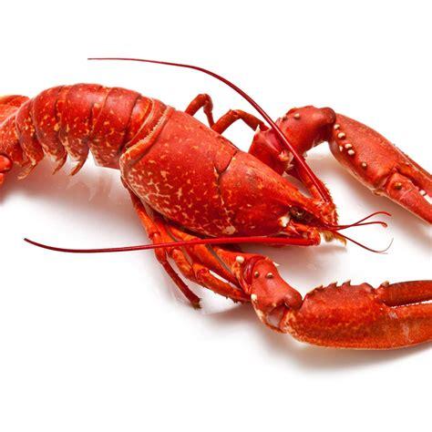 homard cuisine homard recettes de homard cuisine actuelle