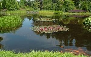 amenagement bassin poisson great ralisation bassin bio With awesome decoration bassin de jardin 1 pas japonais photo de decoration de jardin stephanie