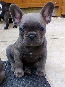 2634 best images about cute on Pinterest | Discover best ...