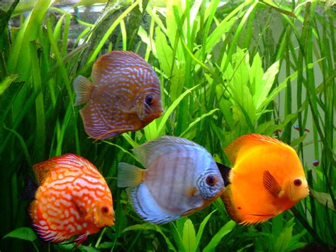 poissons exotiques d aquarium aquarium et bassin