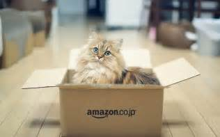 cat in a box cat in box wallpaper high definition high quality