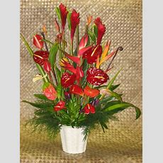 Buy Anthuriums And Tropical Flowers